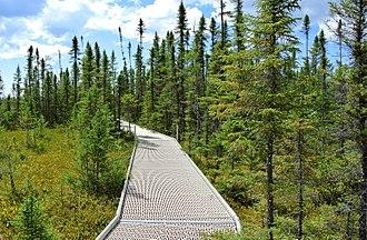 Big Bog State Recreation Area - Boardwalk in the Big Bog State Recreation Area, near Waskish, Minnesota