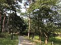 Miwadai Central Park 20170528-3.jpg