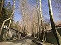 Mobarak Abad street در خیابان مبارک آباد - panoramio.jpg