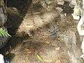 Mojarras - panoramio.jpg