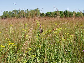 Jay C. Hormel Nature Center nature preserve in Minnesota, USA