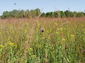 Jay C. Hormel Nature Center - Image: Monarchs