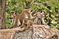 Monkeys (5117737179).jpg