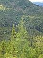 Mont Olivine view to the north PN de la Gaspesie.jpg