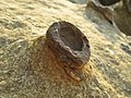 Moon rocks! (4434410483).jpg