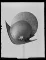 Morion. Troligen 1600-talets första hälft - Livrustkammaren - 10709.tif