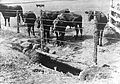 Mortsafe used as a cattle trough, Aberdeenshire. Wellcome L0012140EB.jpg