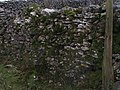 Moss Growing on Limestone Sheepfold. - geograph.org.uk - 369858.jpg