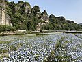Mount Kyoshuho and Nemophila field 7.jpg