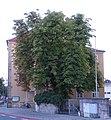 ND Bürgerreuther 1 DSC01783-1440.jpg