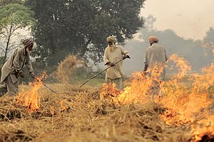 Stubble burning - Burning of rice residues after harvest, to quickly prepare the land for wheat planting, around Sangrur, Punjab, India.