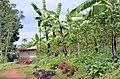 NP Rwanda Coffee3 (6283314515).jpg