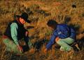 NRCSMT01027 - Montana (4903)(NRCS Photo Gallery).tif