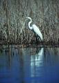 NRCSSD01048 - South Dakota (6115)(NRCS Photo Gallery).tif