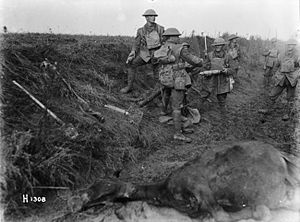 New Zealand Rifle Brigade (Earl of Liverpool's Own) - Members of the New Zealand Rifle Brigade operating a mortar at the front near Le Quesnoy, 1918