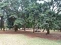 Nairobi Arboretum Park 40.JPG