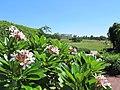 National Arboretum in August (23465048322).jpg