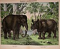 Natural history of the animal kingdom for the use of young people (Plate XVI) (5974372055).jpg