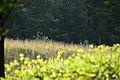 Naturschutzgebiet 08.JPG