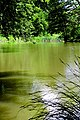 Naturschutzgebiet Hardt Wasserpanorama Sonnig.jpg