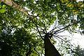 Naturschutzgebiet Haseder Busch - Blick nach oben (1).jpg