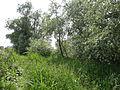 Naturschutzgebiet Heuckenlock 21.05.2014 Phase 113.JPG