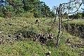 Naturschutzgebiet Heulerberg (5).jpg