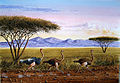 Ndeveni - The Ostrich Run at Maasai Mara Game Park.jpg