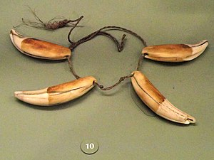 Tucano people - Tucano jaguar tooth and palm cordage necklace, collection of AMNH