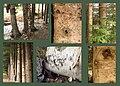 Neebing Woods (136315076).jpg