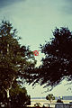 New Orleans 1963 Confederate flag.jpg