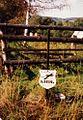 Niedzwiedzica, Kruk tomb IX 1991r.jpg