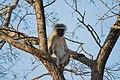 Nkomazi Game Reserve, South Africa (22639302802).jpg