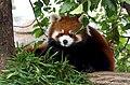 Oji zoo, Kobe, Japan (27898569075).jpg