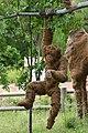 Oklahoma City Zoo 5-26-2014 (14096435669).jpg