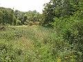 Old Cricketground Plantation - geograph.org.uk - 512511.jpg