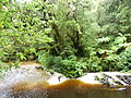 Oparara Basin the River from the footbridge Upstream 1.JPG