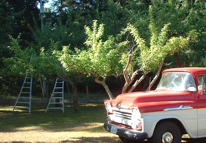 Orchard.ladders