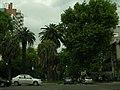 Oroño Boulevard.jpg