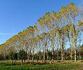 P1340255 Angers parc de Balzac rwk.jpg