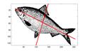 PCA fish.png