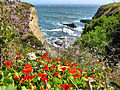 Pacific-cliffs ForestWander.jpg