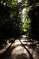 Pacific Spirit Park (4918524523).jpg