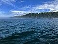 Pacific coast north of Port Renfrew BC.jpg