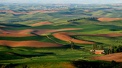 Palouse Hills from Steptoe Butte.jpg