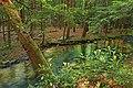 Palustrine Forest (3) (9002051186).jpg