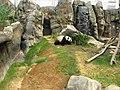 Panda (7987443751).jpg