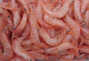 English: A heap of Pandalus borealis shrimp. O...
