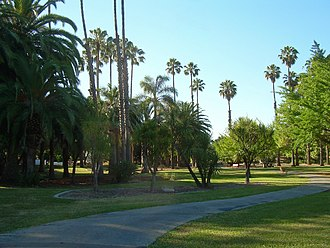 Overfelt Gardens - Field of palms.