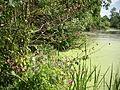 Park pałacowy w Żmigrodzie -16.jpg